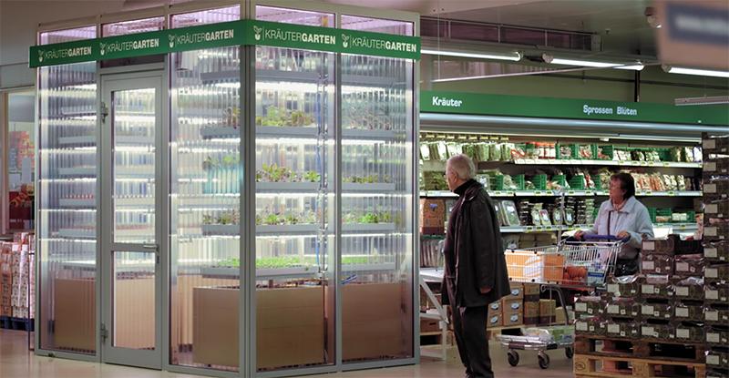 Här odlas grönsakerna direkt i butiken