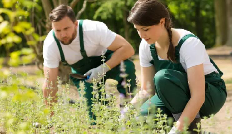 Plantagen lanserar tjänst för trädgårdshjälp